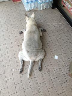 犬の写真・画像素材[94815]