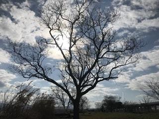 12月の空の写真・画像素材[2787449]