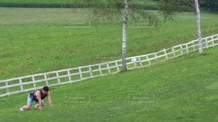 緑豊かな野原の写真・画像素材[2444804]