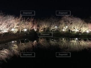 池のクローズアップの写真・画像素材[2445210]