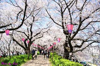 公園の大きなピンクの凧の写真・画像素材[2446083]