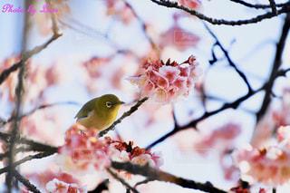 木の枝に座っている小さな鳥の写真・画像素材[2446293]