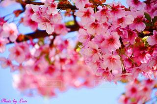 花のクローズアップの写真・画像素材[2446296]