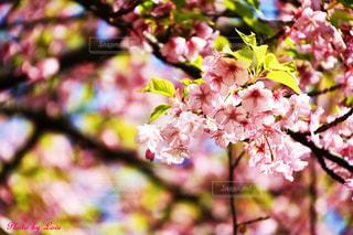 植物に花のある木の写真・画像素材[2446298]