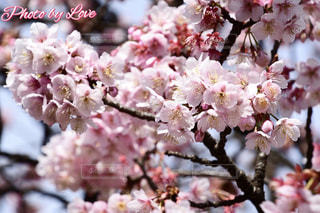 花のクローズアップの写真・画像素材[2446300]