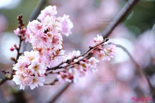 花のクローズアップの写真・画像素材[2446301]