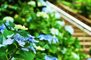 庭の緑の植物の写真・画像素材[2446311]