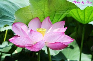 花の写真・画像素材[2473928]