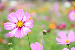 花のクローズアップの写真・画像素材[2514325]