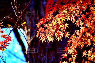 秋の昼下がりの写真・画像素材[2817337]