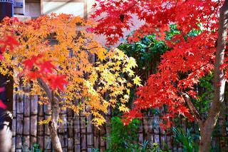 秋の昼下がりの写真・画像素材[2817344]