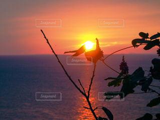 夕日の写真・画像素材[2868783]