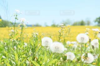 花のクローズアップの写真・画像素材[2447253]