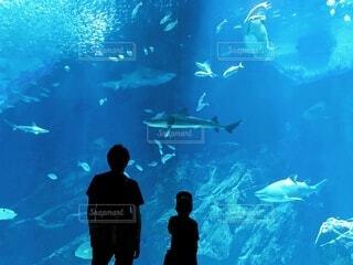 水族館の写真・画像素材[3699803]