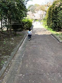春の散歩の写真・画像素材[2473876]