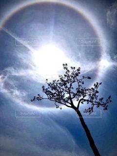 奇跡の一本松の写真・画像素材[2473833]