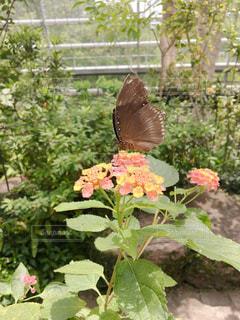 蝶の温室の写真・画像素材[2454396]