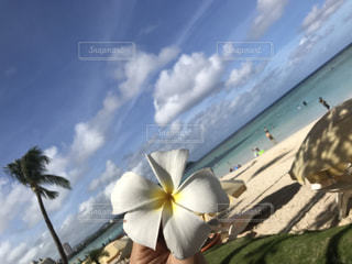 花のクローズアップの写真・画像素材[2451378]
