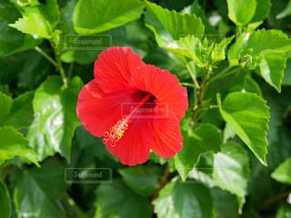 植物のクローズアップの写真・画像素材[2449986]