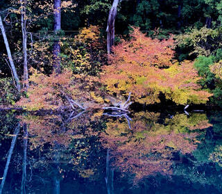 信州・青木湖で見る紅葉の写真・画像素材[3916292]