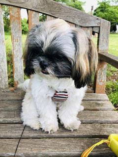 木陰で休む仔犬の写真・画像素材[2452620]