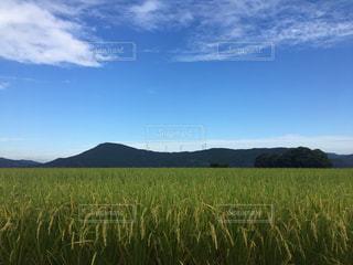 白い雲と青い空と緑の畑の写真・画像素材[2459147]
