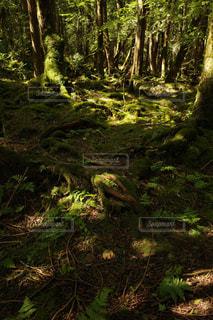 自然の写真・画像素材[2482429]