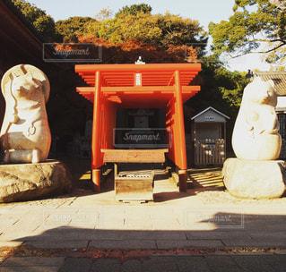 タヌキと鳥居の写真・画像素材[2455335]