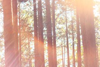 窓の隣の木の写真・画像素材[2452331]