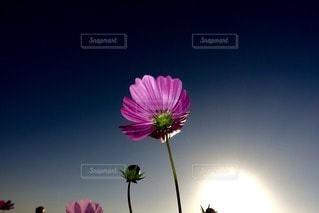 自然の写真・画像素材[94783]