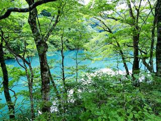 白神山地の青池。の写真・画像素材[2463042]