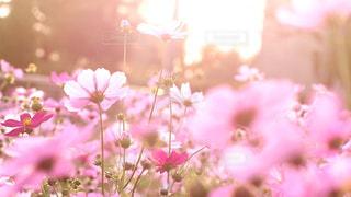 花の写真・画像素材[2473844]
