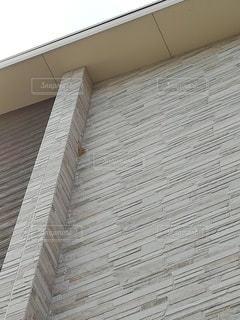 蜂の巣の写真・画像素材[2470770]