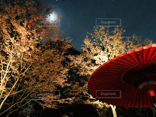 月夜の庭園の写真・画像素材[2465400]