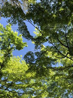 森の木々の写真・画像素材[2466217]