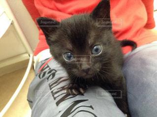 黒ネコの写真・画像素材[2473912]