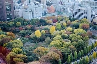都会の紅葉の写真・画像素材[2506331]