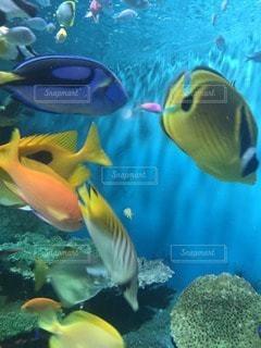 熱帯魚 - No.99308