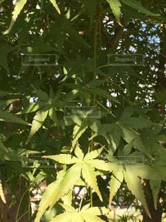 木のクローズアップの写真・画像素材[2459695]