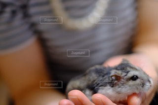 動物の写真・画像素材[94697]