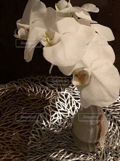 アンティーク花瓶と胡蝶蘭の写真・画像素材[2707398]