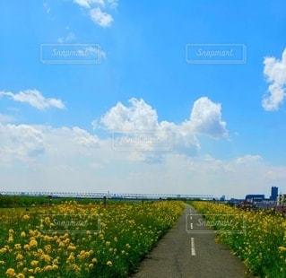 土手と菜の花とサイクリングロードの写真・画像素材[2458339]