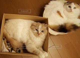 箱と鍋に入り見つめる猫の写真・画像素材[2460129]