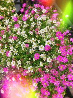 花のクローズアップの写真・画像素材[2454671]