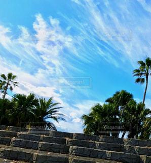 青い空とヤシの木の写真・画像素材[2457780]