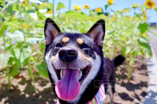 庭の犬の写真・画像素材[2455388]