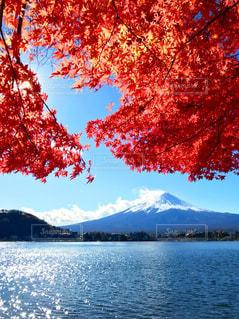 秋の富士山の写真・画像素材[2460406]