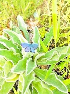 羽を休めてる綺麗な蝶の写真・画像素材[2453320]