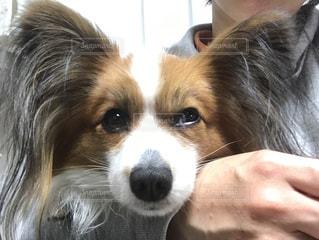 犬の写真・画像素材[356471]