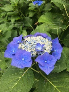 自然の写真・画像素材[114469]
